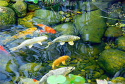 Aquatics Products and Pond Care